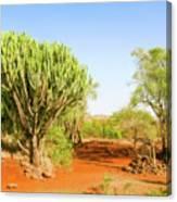 candelabra euphorbia tree Euphorbia candelabrum, Kenya Canvas Print