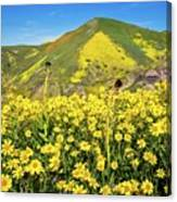 Candle Light In The Temblors - Superbloom 2017  Canvas Print