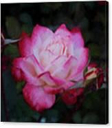 Candy Care Cocktail Floribunda Rose- Digital Art Canvas Print