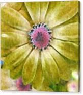 Candy Garden Canvas Print
