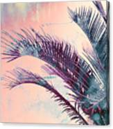 Candy Palms Canvas Print