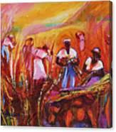 Cane Harvest Canvas Print