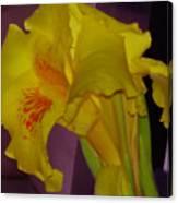 Canna Flower Canvas Print