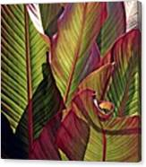 Canna Leaves 2   Canvas Print