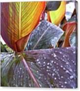 Canna Lily I  Canvas Print