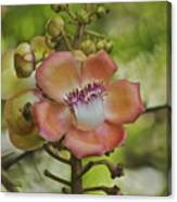 Cannonball Blossom Canvas Print