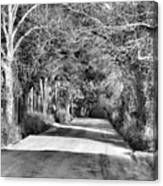 Canopy Clay Road Canvas Print