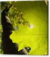 Canopy View Canvas Print