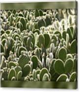 Canvas Of Cacti Canvas Print