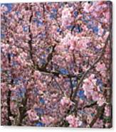 Canvas Of Pink Blossoms Canvas Print