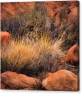 Canyon Grasses Canvas Print