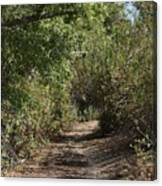 Canyon Path I Canvas Print