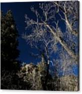 Canyon Tree Canvas Print