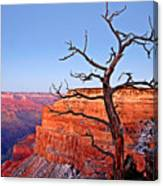 Canyon Tree Canvas Print