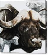 Cape Buffalo Canvas Print