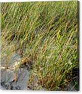 Cape Cod Beach 2 Canvas Print