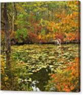 Cape Cod Kettle Pond Foliage Canvas Print