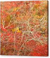 Cape Cod National Seashore Dwarf Beech Foliage Canvas Print