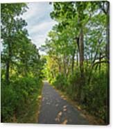Cape Cod Rail Trail Trees Eastham Ma 2 Canvas Print