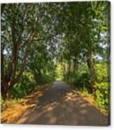 Cape Cod Rail Trail Trees Eastham Ma Canvas Print