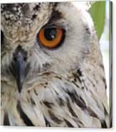 Cape Eagle-owl Canvas Print