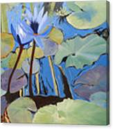 Capistrano Lillies Canvas Print