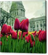 Capitol Tulips Canvas Print