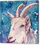 Capricorn Canvas Print