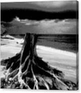 Captiva Storm Canvas Print