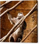 Captivity Canvas Print