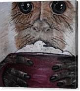 Capuchino Canvas Print