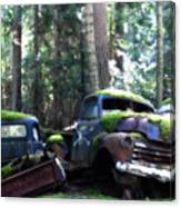 Car Lot In The Forest Canvas Print