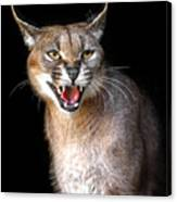 Caracal Hissy Fit Canvas Print