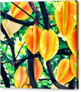 Carambolas Starfruits Canvas Print