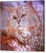 Caramel Cream Canvas Print