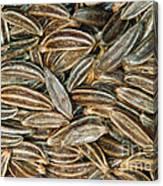 Caraway Seeds Canvas Print