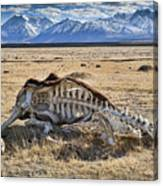 Carcass With A View Canvas Print