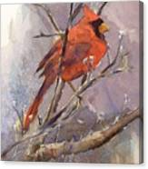 Cardinal - Male Canvas Print