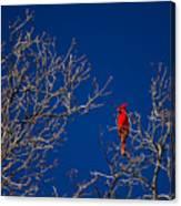Cardinal Against Blue Sky Canvas Print