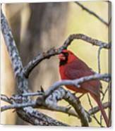 Cardinal Among The Branches Canvas Print