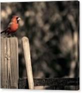Cardinal At His Post Canvas Print