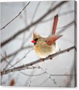 Cardinal Facing A Brisk Wind Canvas Print