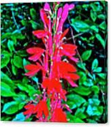 Cardinal Flower Near Schroon River In The Adirondacks-new York  Canvas Print