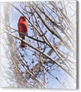 Cardinal I Canvas Print