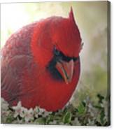 Cardinal In Flowers Canvas Print