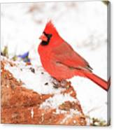 Cardinal In Snow Canvas Print