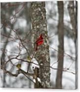 Cardinal In Snow Storm Canvas Print