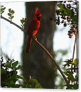 Cardinal In The Crepe Myrtle Canvas Print