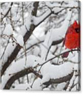 Cardinal In The Snow 3 Canvas Print