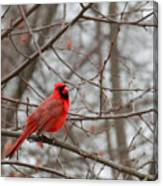Cardinal In The Winter Canvas Print